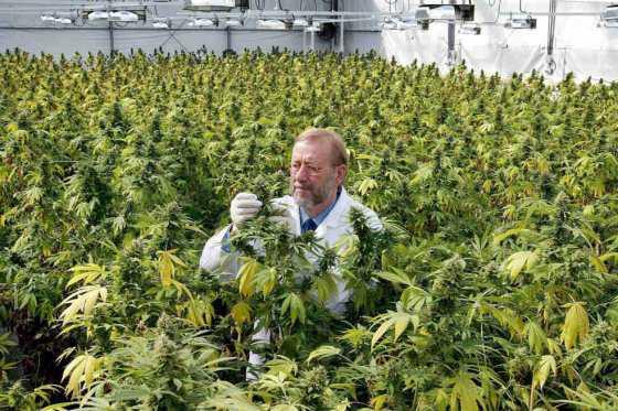 Uruguay a despertado que en muchos Países se generen movimientos pidiendo la legalización del cannabis. (FOTO: INTERNET)