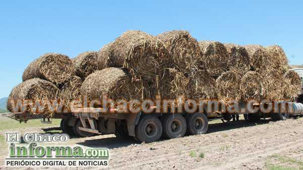 Está en marcha el proceso de adquisición de aproximadamente 1500 toneladas de forraje que garantizará la alimentación del ganado.