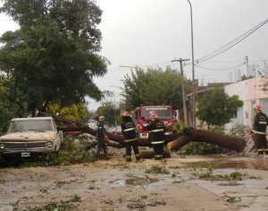 Personal de bomberos realiza el retiro de un árbol.