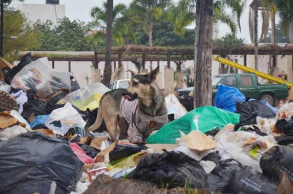 La basura llega hasta la plaza central de la ciudad. (Foto: El Chaqueño)
