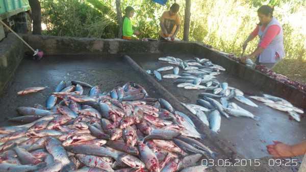 Problemas entre las comercializadoras de pescado. (Foto: El Chaqueño)