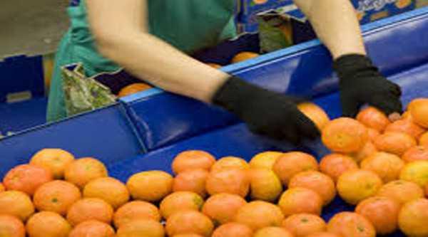 Los trabajadores de cítricos pidieron el 30% de aumento. (Foto: El Tribuno)