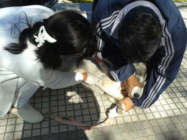 Las autoridades califican de exitosa la campaña de vacunación. (Foto: El Chaqueño)