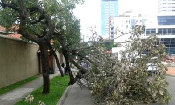 Letreros comerciales y árboles fueron derribados. (Foto: Correo del Sur)