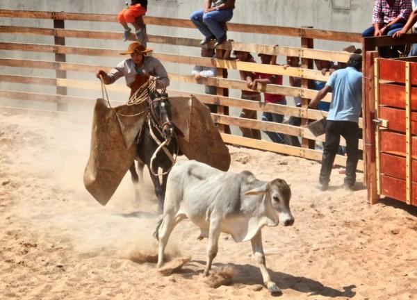 Pialada en el rodeo de la tradición chaqueña. (Foto de archivo)