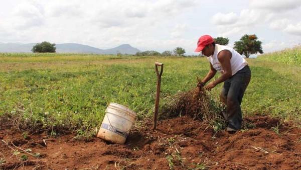 El objetivo es generar valor agregado a la producción de maní en Yacuiba. (Foto: referencial)