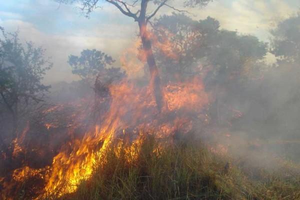 Los incendios forestales se consideran un delito medioambiental. (Foto referencial)