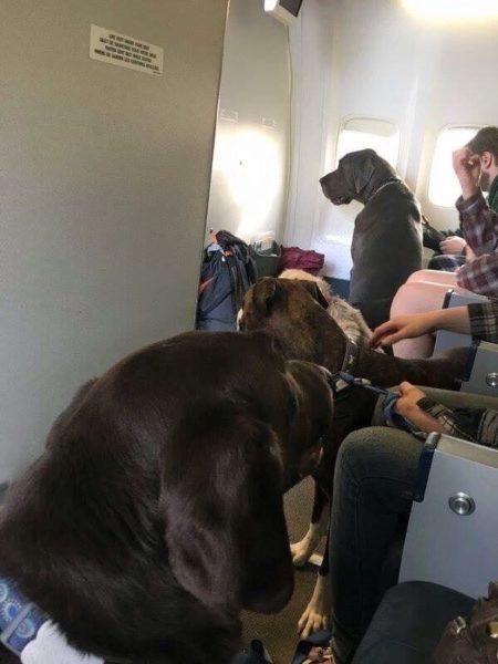 Las mascotas en la cabina de la aeronave. (Foto: Twitter)