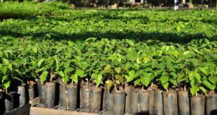 TARIJA: FONDO DE DESARROLLO FORESTAL IDENTIFICA TRES PROYECTOS PARA FINANCIAR
