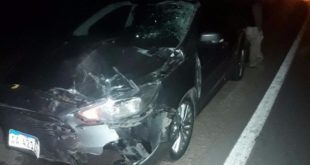 SALTA: ENJAMBRE DE ABEJAS CAUSA UN GRAVE ACCIDENTE