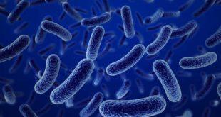 Las cuatro superbacterias que amenazan a los latinoamericanos