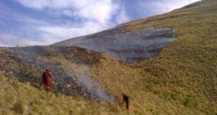 Reforestación de Sama inicia el 25 de noviembre en Tucumilla