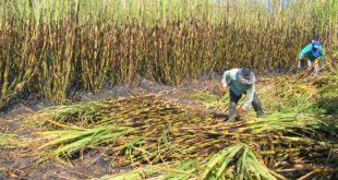 Alistan proyecto para aprovechar residuos de caña en Bermejo