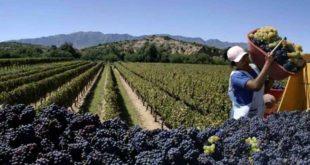 Tarija: Instituto de innovación agropecuaria impulsa el uso de drones en la agricultura