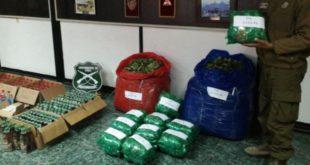 En Chile detienen a tres bolivianos por contrabandear coca