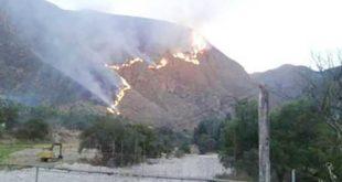 Tarija: Reforestación en Sama presenta demoras por dificultades en buscar especies nativas