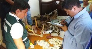Policía desarticula organización criminal que fomentaba la caza furtiva de animales en extinción